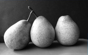24th Apr 2019 - Pear still life - after Edward Weston