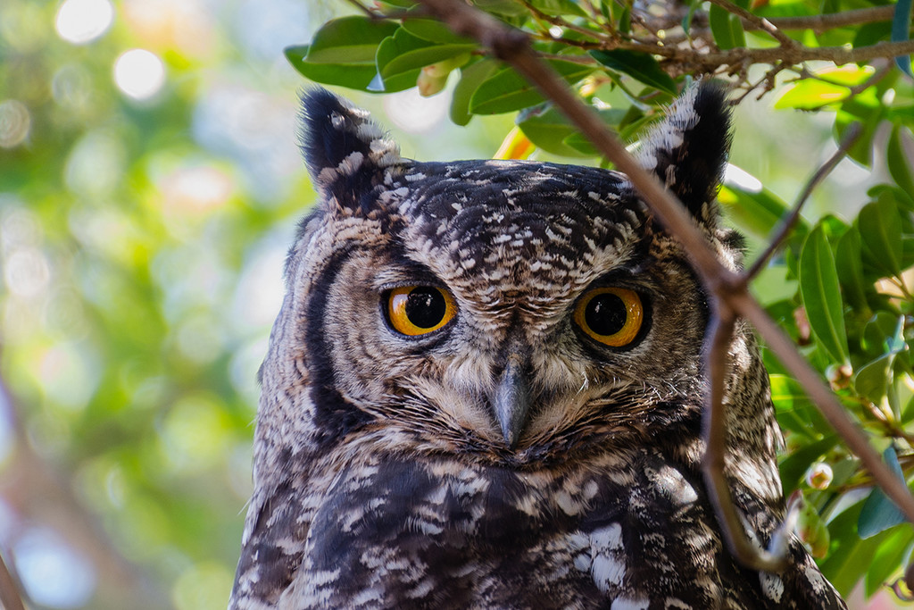 Wise Owl by salza