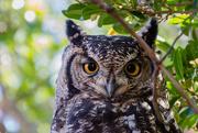 24th Apr 2019 - Wise Owl