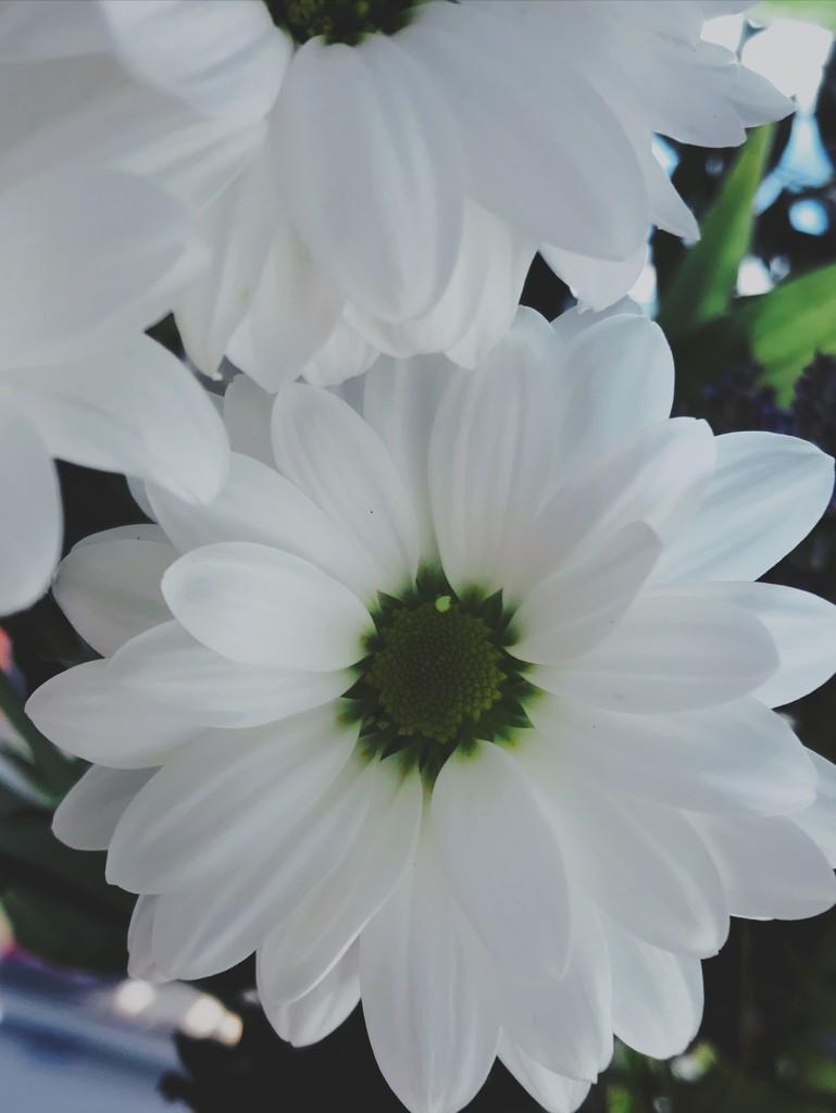 24-04 flower by tstb13