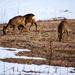 Deers by elisasaeter