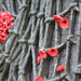 Anzac Day - Red Poppies