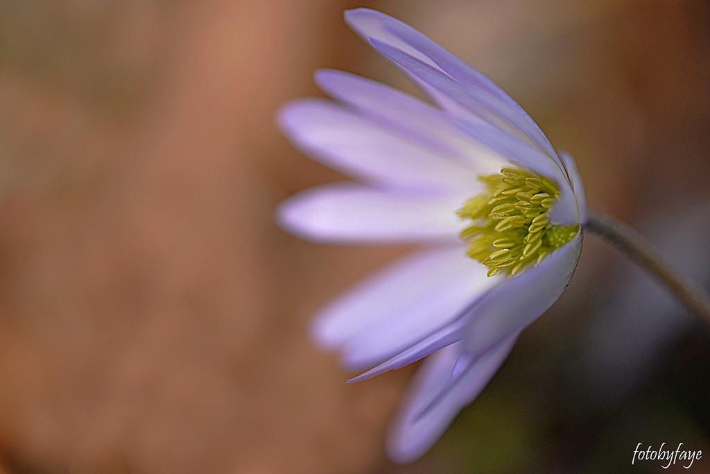 Purple flower! by fayefaye