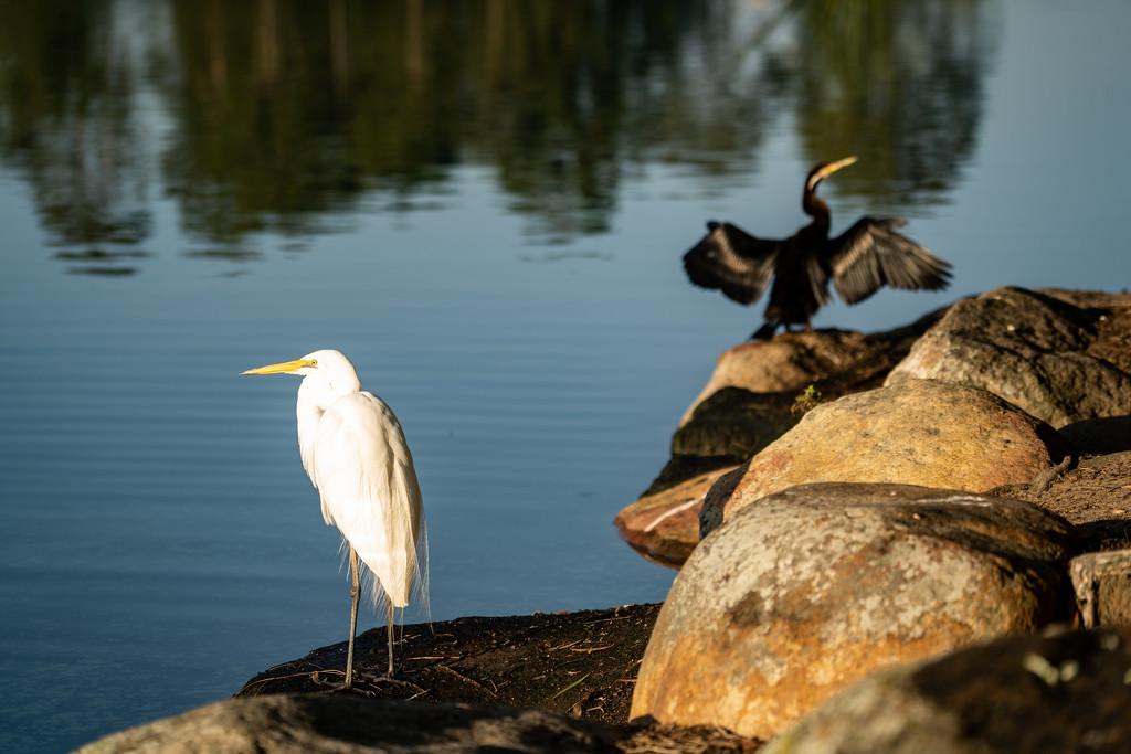 Lake birds by sugarmuser