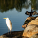Lake birds