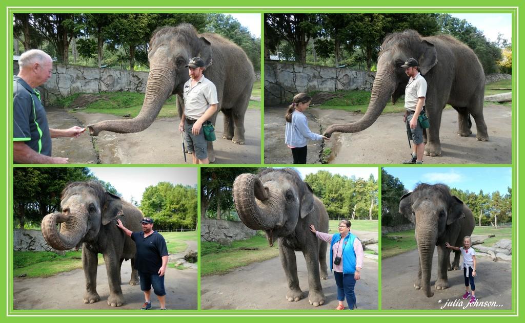 Elephant experience.. by julzmaioro