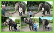 25th Apr 2019 - Elephant experience..