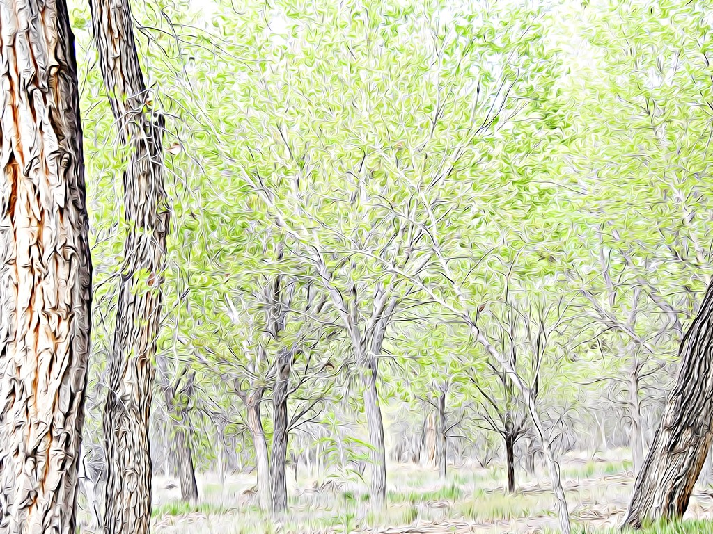 Spring in Albuquerque's Bosque by janeandcharlie