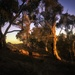 Evening in the bush