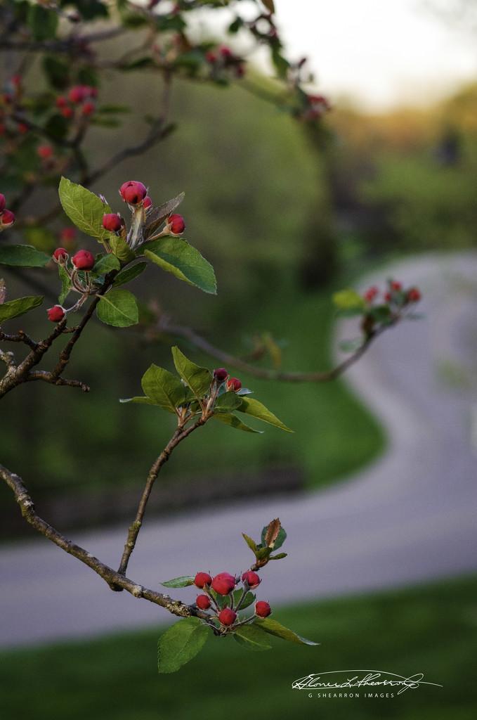 Blooming Path by ggshearron