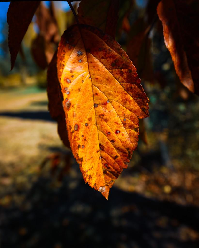 Autumn leaves #3 by gigiflower