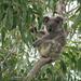 Frankie Ahoy by koalagardens