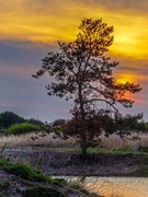 18th Apr 2019 - Snettisham Sunset