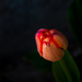 Spring dawns by joansmor