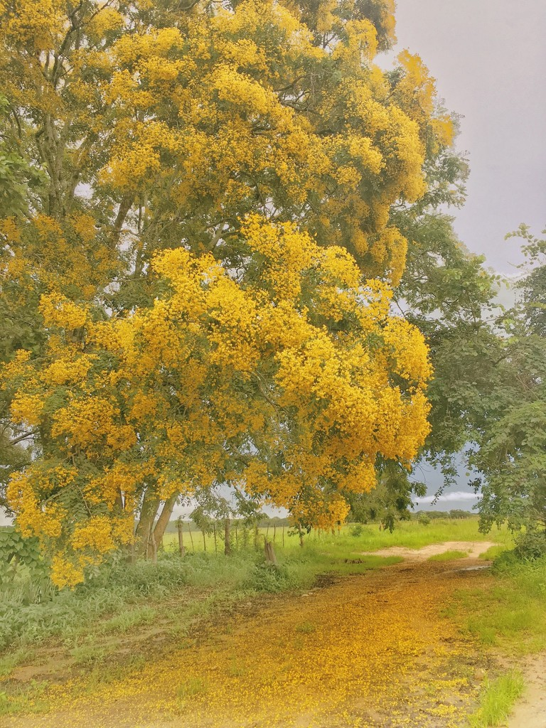 The colour yellow  by zambianlass
