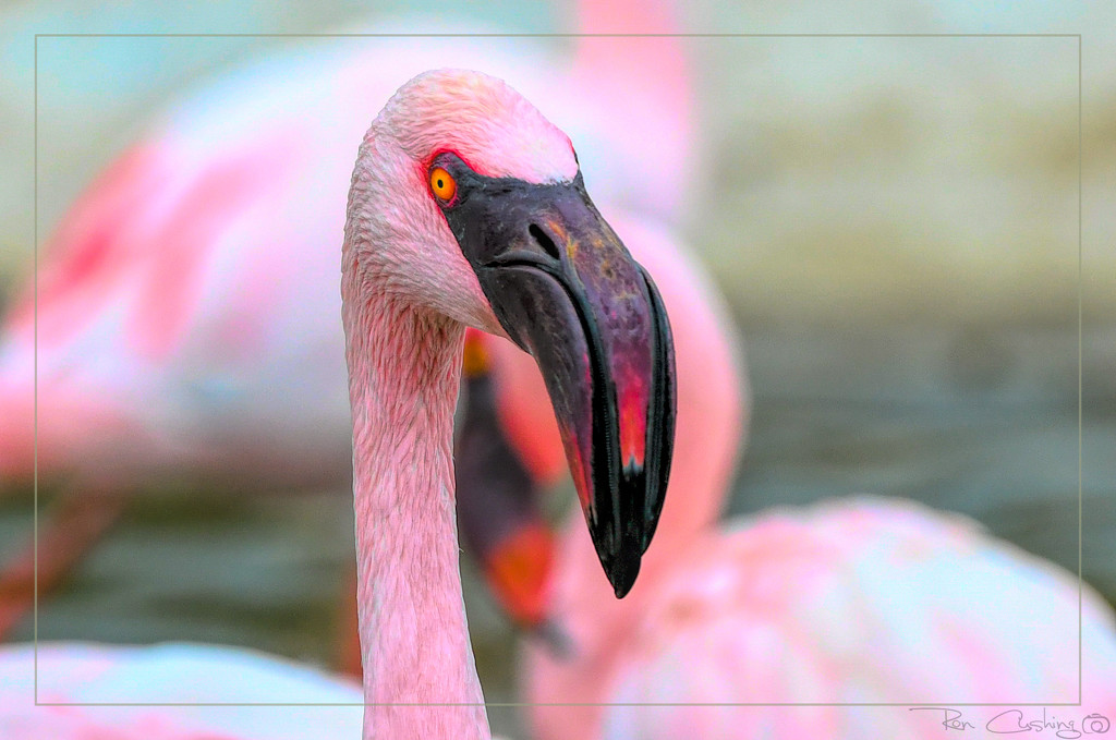Flamingo Friday '19 11 by stray_shooter