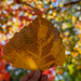 Autumn leaves #THE END!