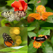 Beautiful Butterflies! by fayefaye