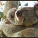 nearly natural by koalagardens
