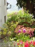 26th Apr 2019 - Flowery Alley