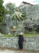 24th Apr 2019 - Giant Yucca