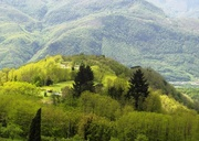 25th Apr 2019 - Rolling Green Hills of Tuscany