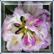 28th Apr 2019 - First Rhododendron this year