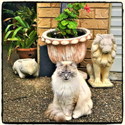 29th Apr 2019 - The Lion The Cat & The Wombat ~