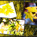 Get Pushed Week 352 - Autumn Collage
