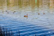 28th Apr 2019 - river birds