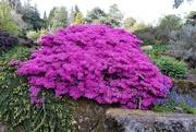 28th Apr 2019 - Royal Botanical Gardens