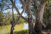 29th Apr 2019 - The Mighty Murray