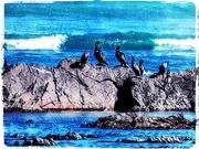 30th Apr 2019 - Cormorants on the rocks