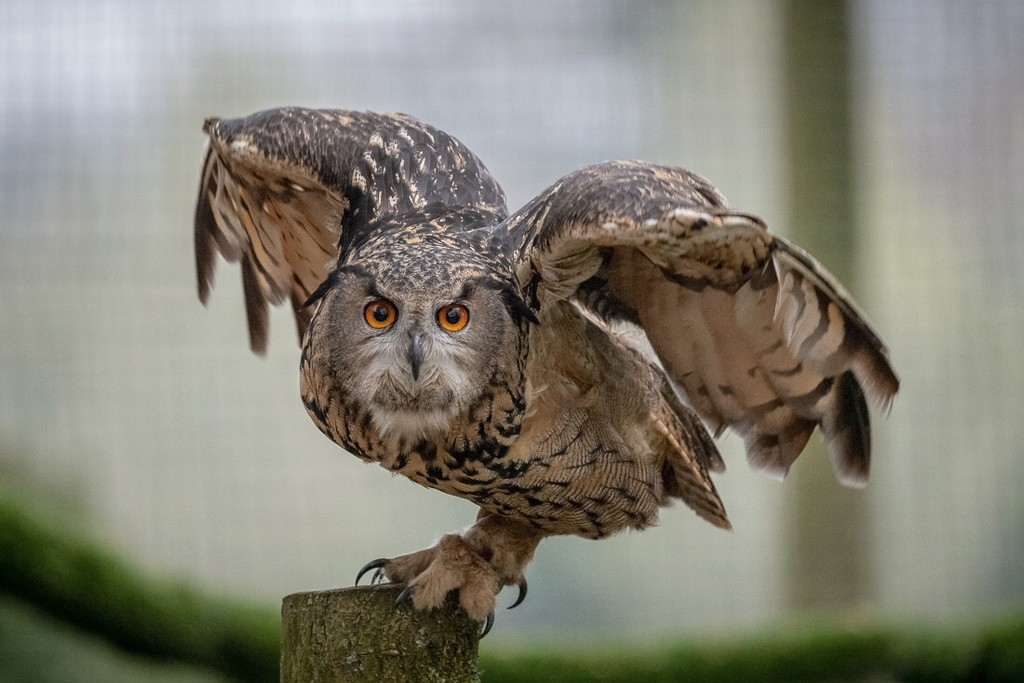 Owl by pasttheirprime
