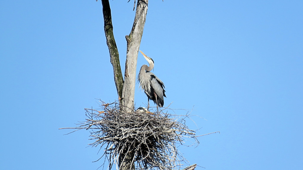 Nesting by maggie2