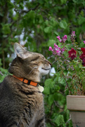 29th Apr 2019 - the cat who smells the flowers