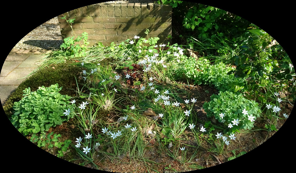 little white flowers by gijsje