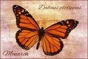 30th Apr 2019 - Monarch