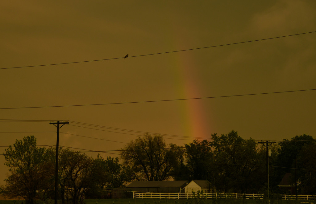 Mourning Dove and Rainbow by kareenking
