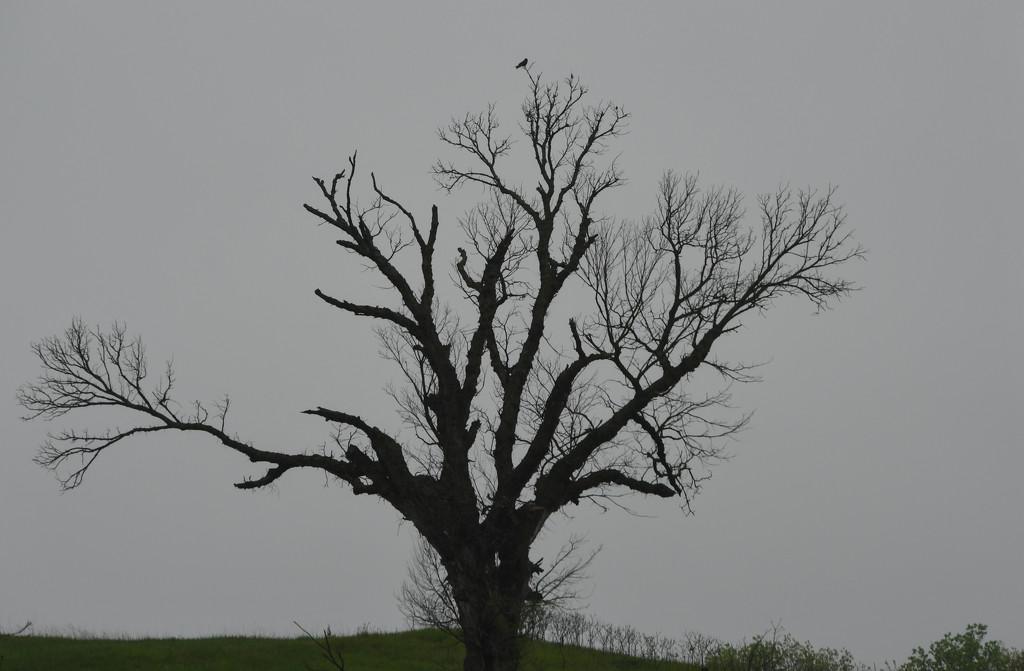 Bird on a Tree by kareenking