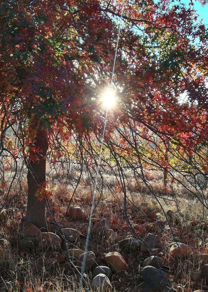 Autumn Light by salza