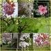 spring 19 by sarah19
