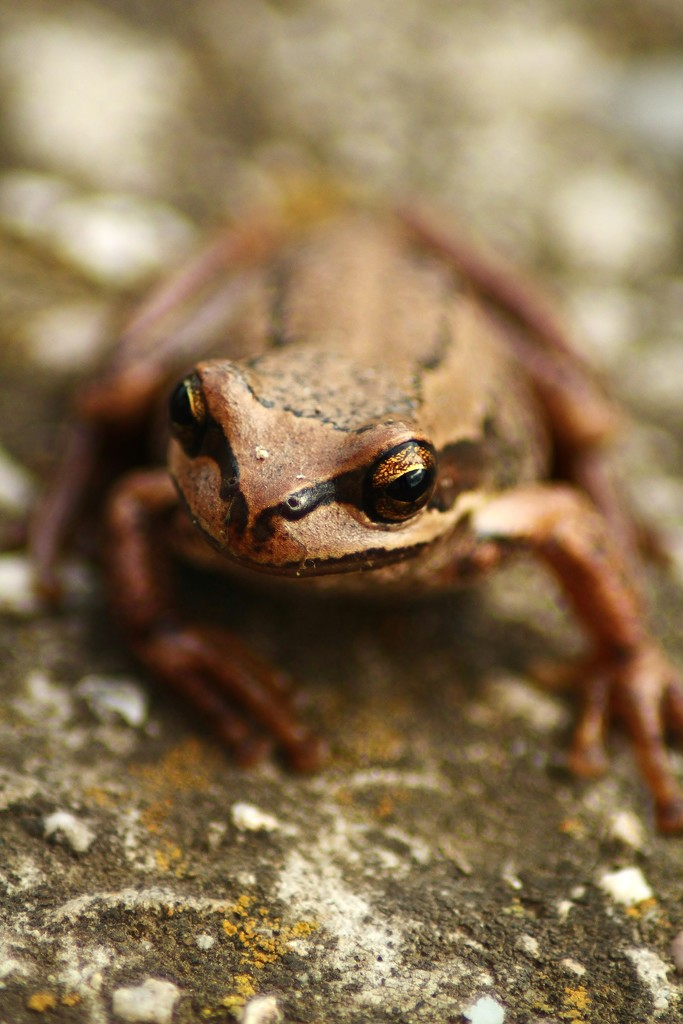 amphibian by wenbow
