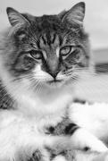 2nd May 2019 - master cat