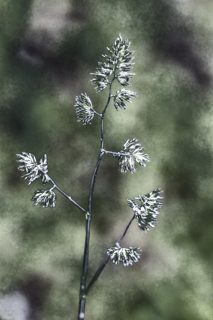 Weed Art by kvphoto