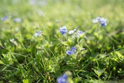 2nd May 2019 - Covering the grass with spots of azure foam