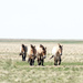 A day with wild horses