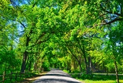3rd May 2019 - Is there anything prettier than a tree covered lane in springtime?