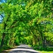 Is there anything prettier than a tree covered lane in springtime?  by louannwarren