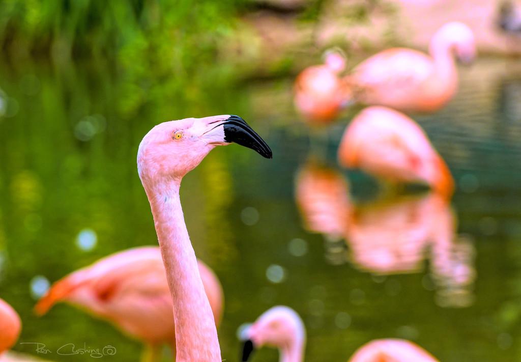 Flamingo Friday '19 12 by stray_shooter